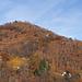 Schütterer Herbstwald bei Monte Zucchero