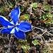 kleine Blume ganz gross