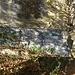 ....cava di pietra di Moltrasio...rimessa in funzione....