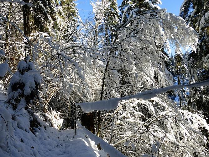 Sieht Aus Wie Im Winter
