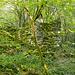 Ein Hauch von Urwald