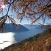 Vista sulle Isole di Brissago.