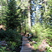 Heliotrope Ridge Trail