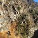 La cengia dei rovi, passaggio obbligato verso Ludo Alboc