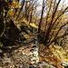das letzte Bild vom Abstieg, von den Tiefen des Kastanienlaubs habe ich keine Bilder, da verlangte der Weg volle Konzentration