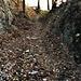 Il sentiero che sale da la Rasa prima della biforcazione.
