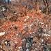 Rovi, cespugli, alberi caduti, ravanamento di cinghiali...