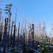 Der etwas erholungsbedürftige Wald.
