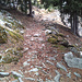 L'ancien chemin montant de Birgsich à Nessel