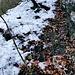 Den Hang kann man problemlos hochgehen (mit Steigeisen) und kommt so ohne Sichern nach oben. Wenn mehr Eis und Schnee vorhanden ist, kann man eventuell auch am Fluss langgehen.