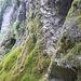 An der Urschlauer Achen findet man zahlreiche moosbewachsene Felsen.