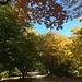 ab der Bushaltestelle Normafa wandern wir länger, meist flach unter unzähligen, herbstlich gefärbten, Bäumen hindurch ...