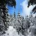 Verträumter Winterwald.