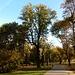die Margareteninsel stellt eine riesige, parkähnliche Grünanlage dar - sehr ruhig, in welcher der Autolärm der Grossstadt kaum wahrnehmbar ist