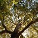 Tausende schönster, stattlicher, Bäume - mit entsprechenden Kronen - finden sich hier