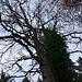 Ein mächtiger Baum !