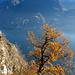 Herbstliche Farbkontraste