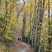 Ab Ciona folgen wir dem Wanderweg über eine laubbedeckte Naturstrasse nach Carona