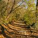 Nach verlassen der Teerstrasse geht es über schöne Waldwege dem Gipfel entgegen