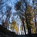 Spätherbstlich zeigt sich der Wald. Kaum zu glauben, dass im Gebirge der Alpennordseite schon Winter herrscht.