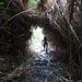Tunnel durch Zuckerrohr