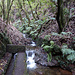 Die Levada produziert ein Wasserfällchen