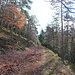 beau chemin forestier partiellement revégétalisé .