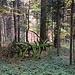 Baumskelett im Wald ...