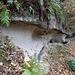 die geschätzten Sandsteinformationen am Mannshusbach