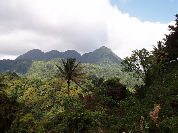 Mount Gimie-der schlecht zugängliche Inselhöhepunkt
