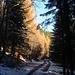 Avant la croix de Wihr : mélèzes d'automne , neige et ciel bleu azur .