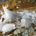 und die heutige Preisfrage lautet: wieviel Tiere kann man in den Eisformen erkennen?