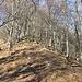 Stufo di un percorso piacevole ma un po' monotono lascio il sentiero normale e risalgo la cima m.1459.