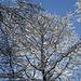 Schnee und vereiste Astspitzen heben sich gegen den blauen Himmel ab