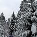 Märchenhafte Winterszenarien.