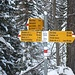 <b>Al Bosco di Ossasco la traccia svolta a destra verso il ponte sul Ri di Cristallina. Io continuo a sinistra, nel lariceto rado, coperto da abbondante neve vergine. È una fatica tutto sommato piacevole, grazie anche al fatto che il vento non si è alzato. La tempistica estiva, in queste condizioni deve comunque essere raddoppiata. Invece di mezz'ora impiego 55 minuti per pervenire all'alpeggio Piano di Pescia (1700 m).</b>