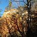Schattenwurf der winterlich kahlen Bäume.