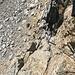Klettersteig Zehner. Hier sieht man deutlich die Steil- und Ausgesetztheit des doch recht kurzen Klettersteig.