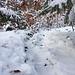 Weglos, auf Wildwechseln durchs Unterholz :-)