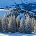 Zauberhafte Winterstimmung am Kronberg
