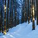 Waldstimmungen (1)  - Der Weg verläuft rechts ausserhalb des Bildes.