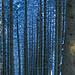 Waldstimmungen (2)