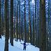 Waldstimmungen (3)