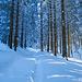 Waldstimmungen (4)
