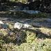 un abitante locale: molto pasciuto,si vede che da queste parti...anche l'erba fa ingrassare