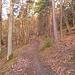 beaux sentiers sur l'itinéraire de montée .