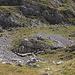 Im Abstieg zwischen Zeleni vir und Dobri do - Vorbei an einer Schafherde.