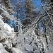 herrliche Winterlandschaft 1
