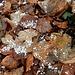 das Wetter schlägt um - attraktiv zeigt sich dennoch das Herbstlaub