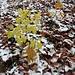 Herbst - vom Winter berührt